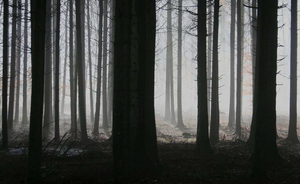 black-and-white-forest