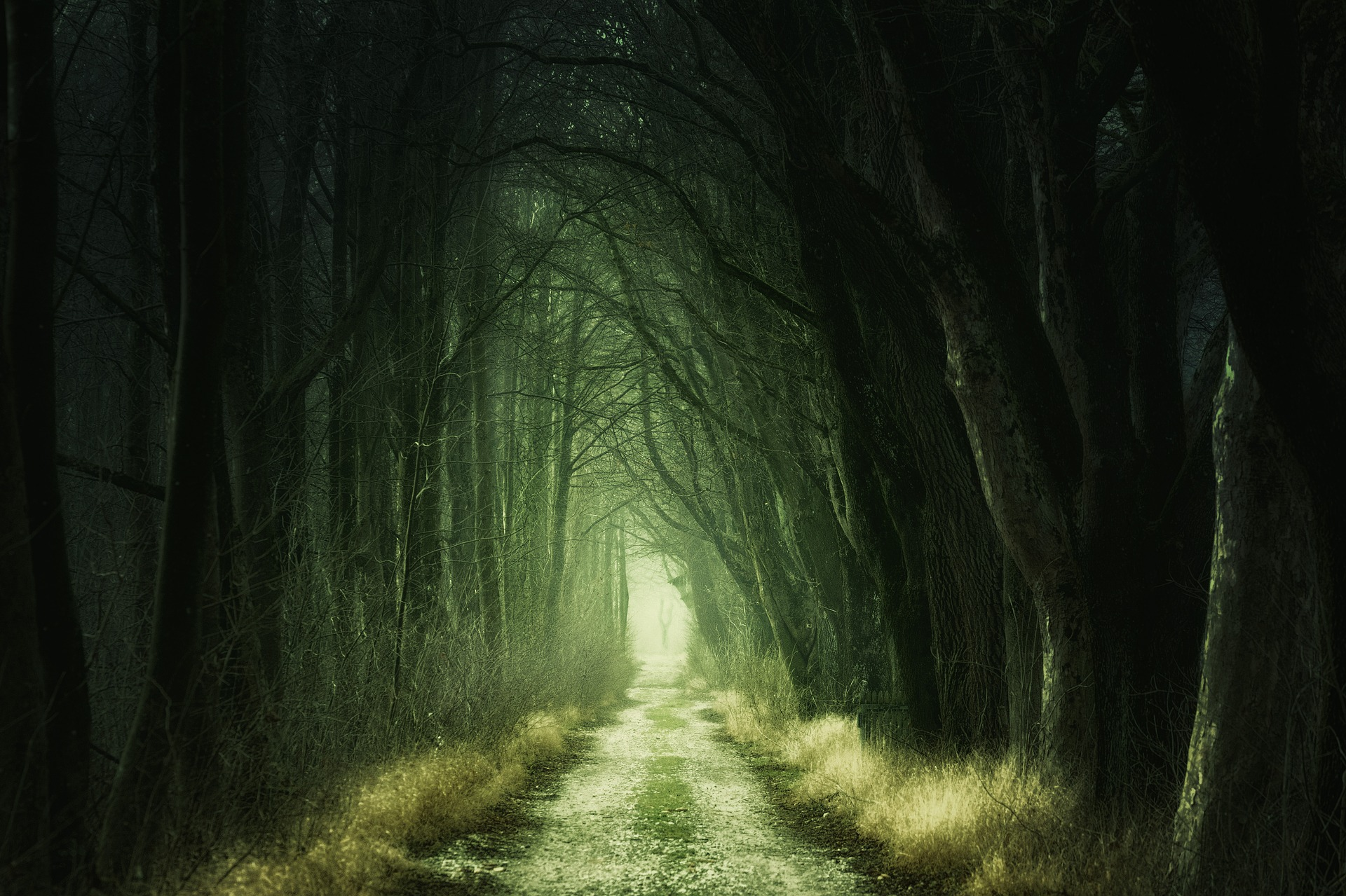 tree-lined-path