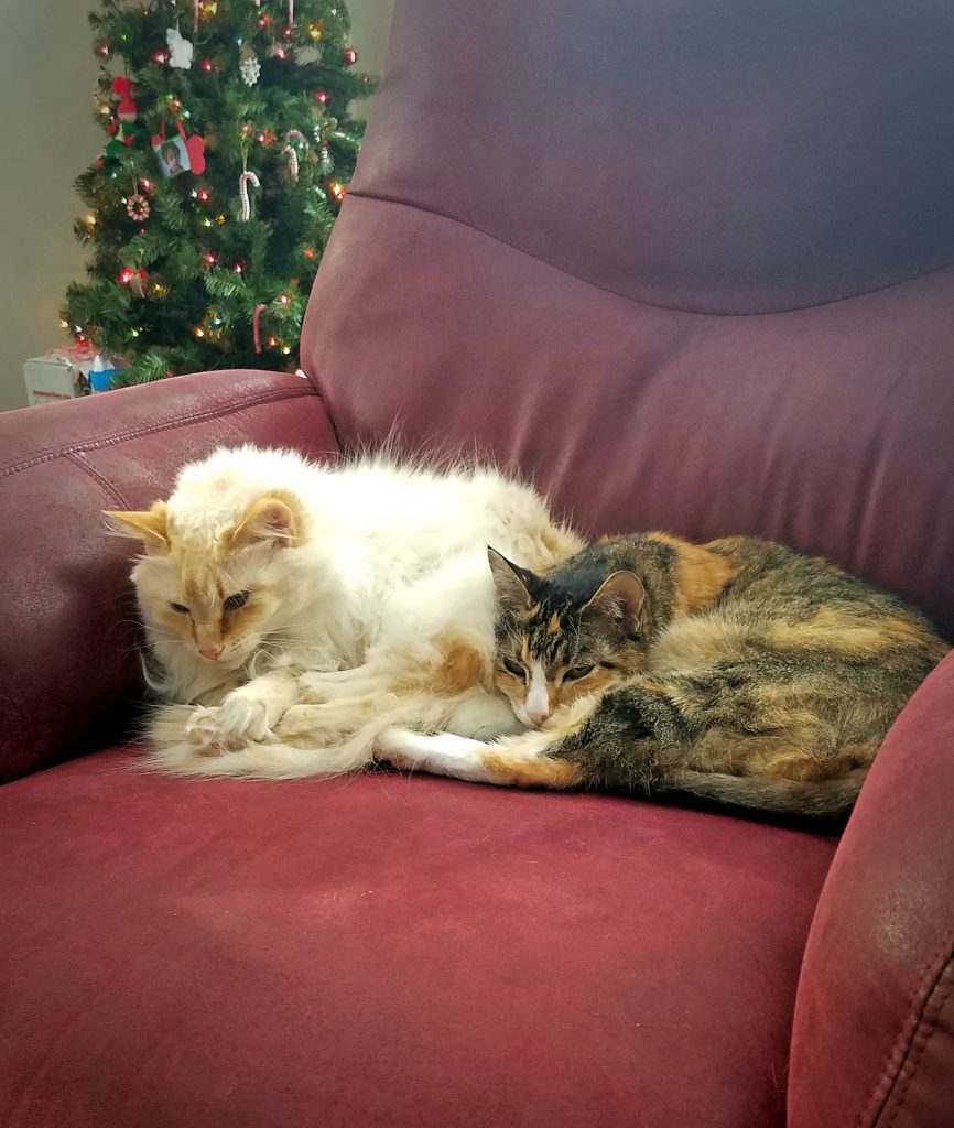 cats-sleeping-on-chair